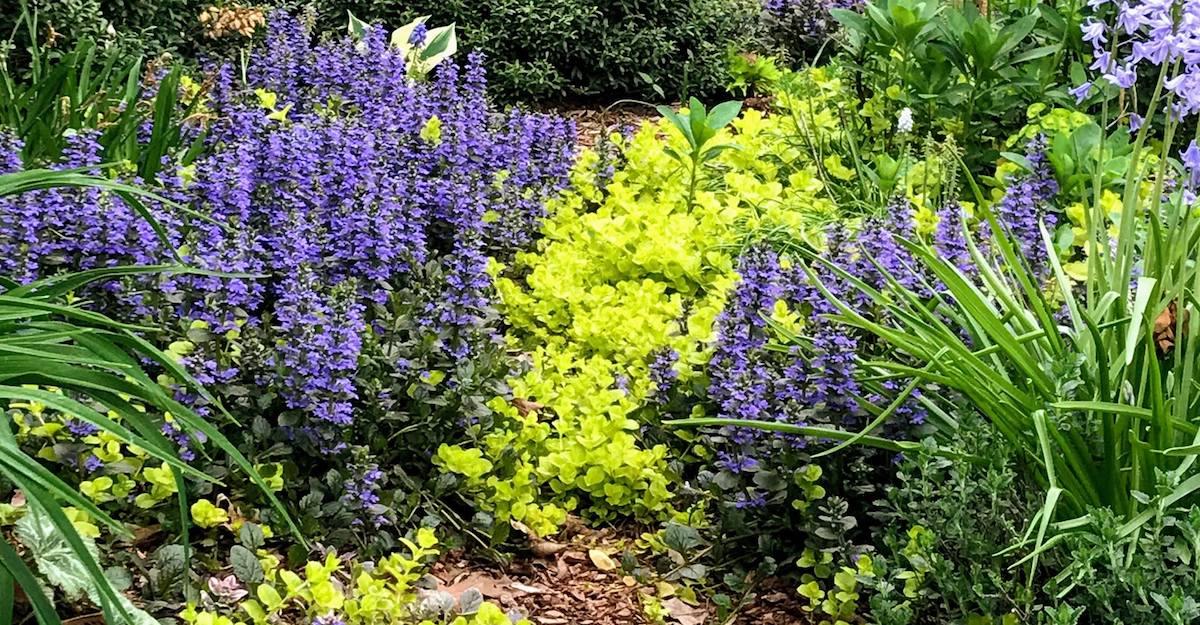 Ardmore Garden Walk